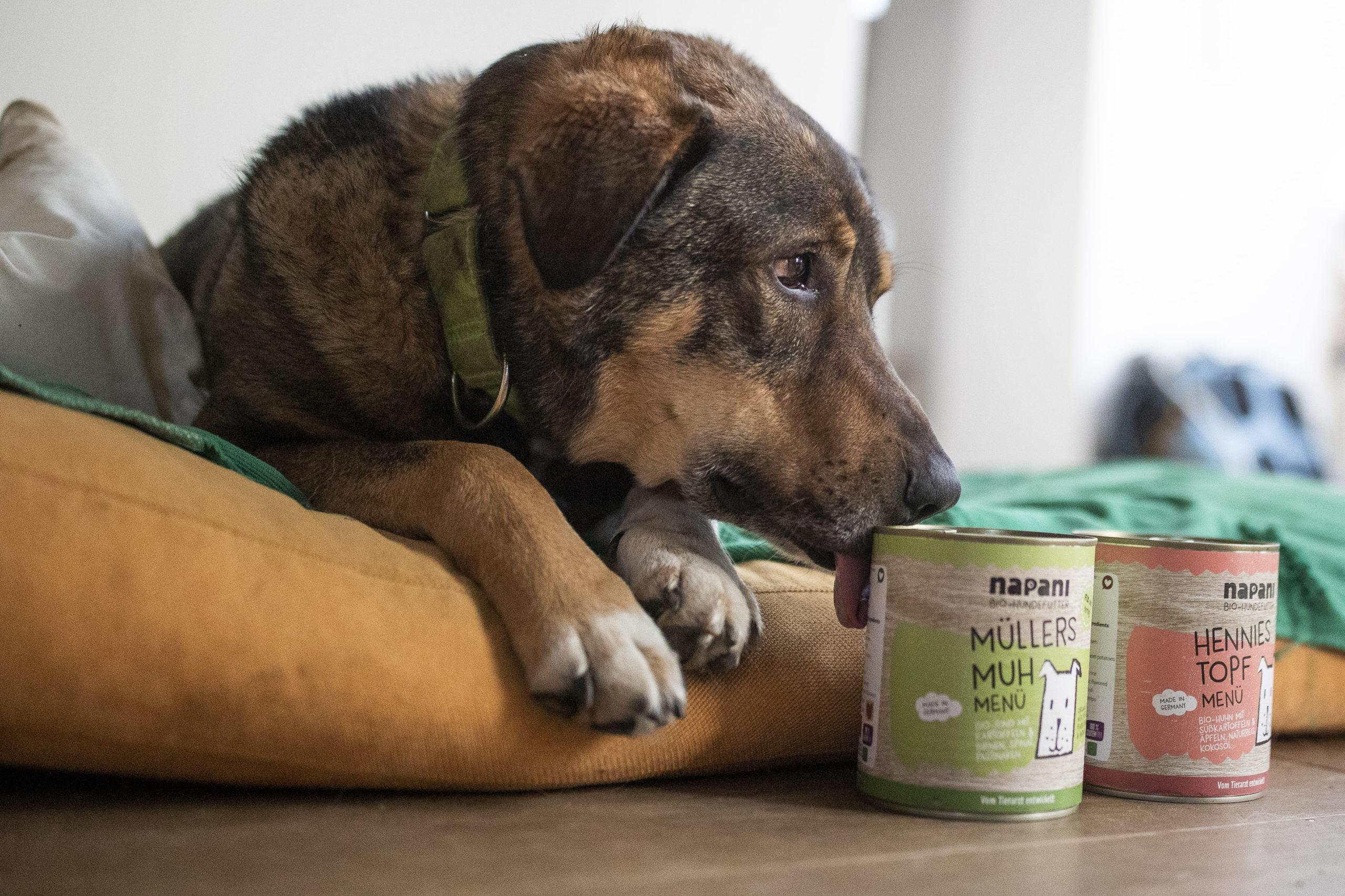 Napani Premiumhundefutter in BIO Qualität